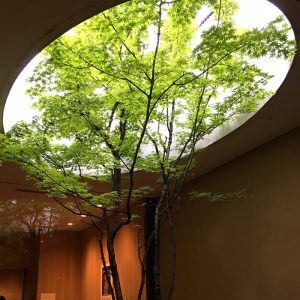 Japanese architecture with tree growing through oculus in roof