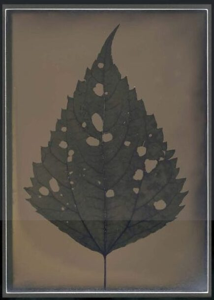"""A dryplate tintype from Larry Gawel's series, """"Harvest - completion"""" (2014)"""