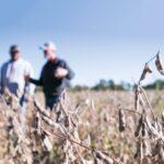Two men standing in a soybean field