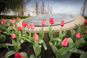 Beautiful Pink Spring Flowers at Missouri State