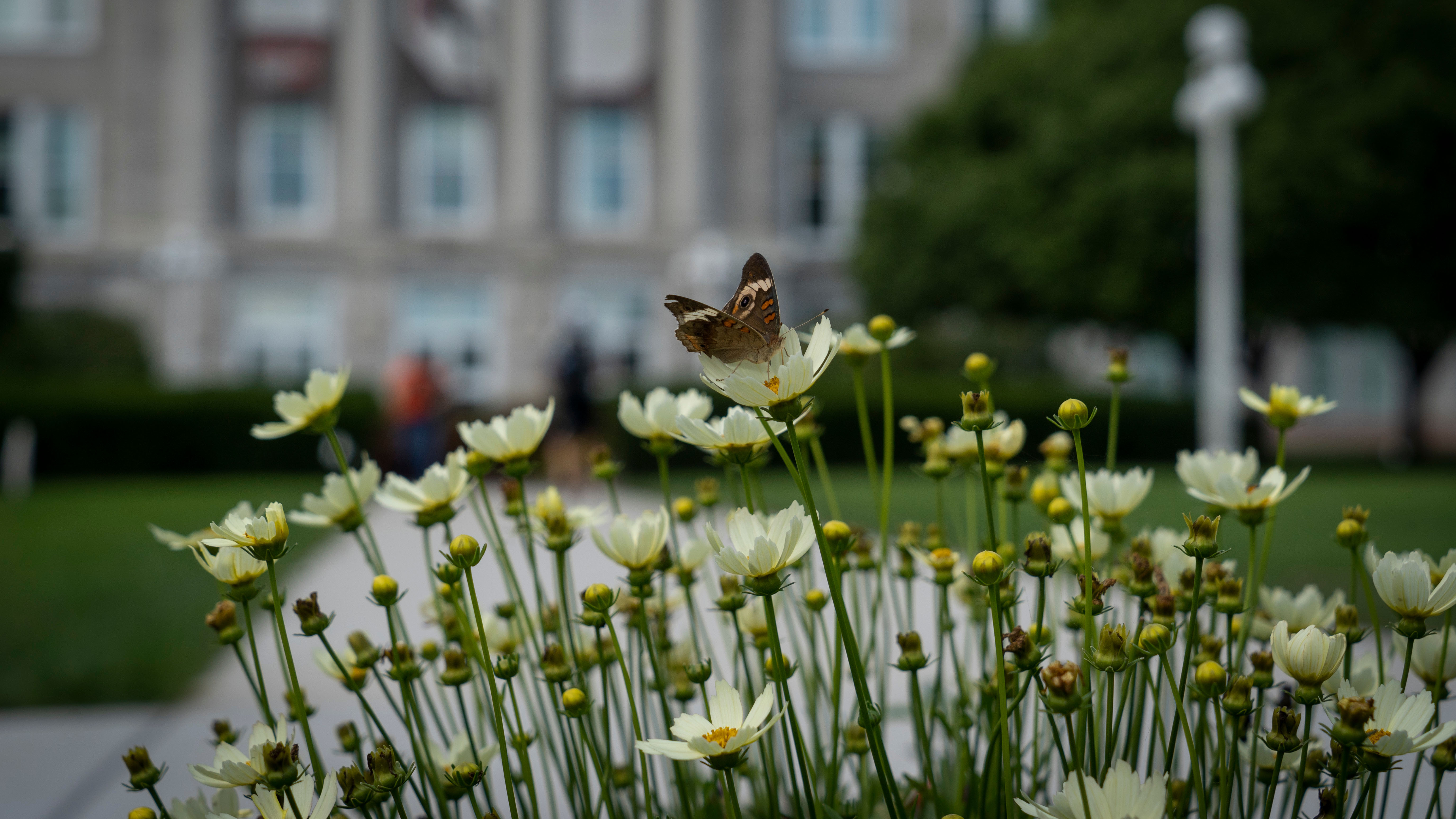 A butterfly in front of Ellis Hall