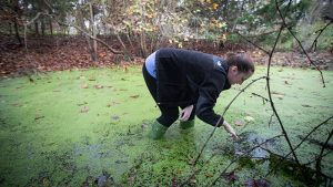 Biology students search for salamanders