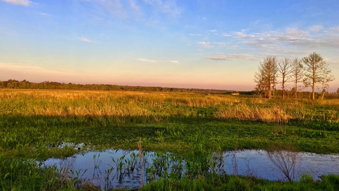 Paynes Prairie in Florida.