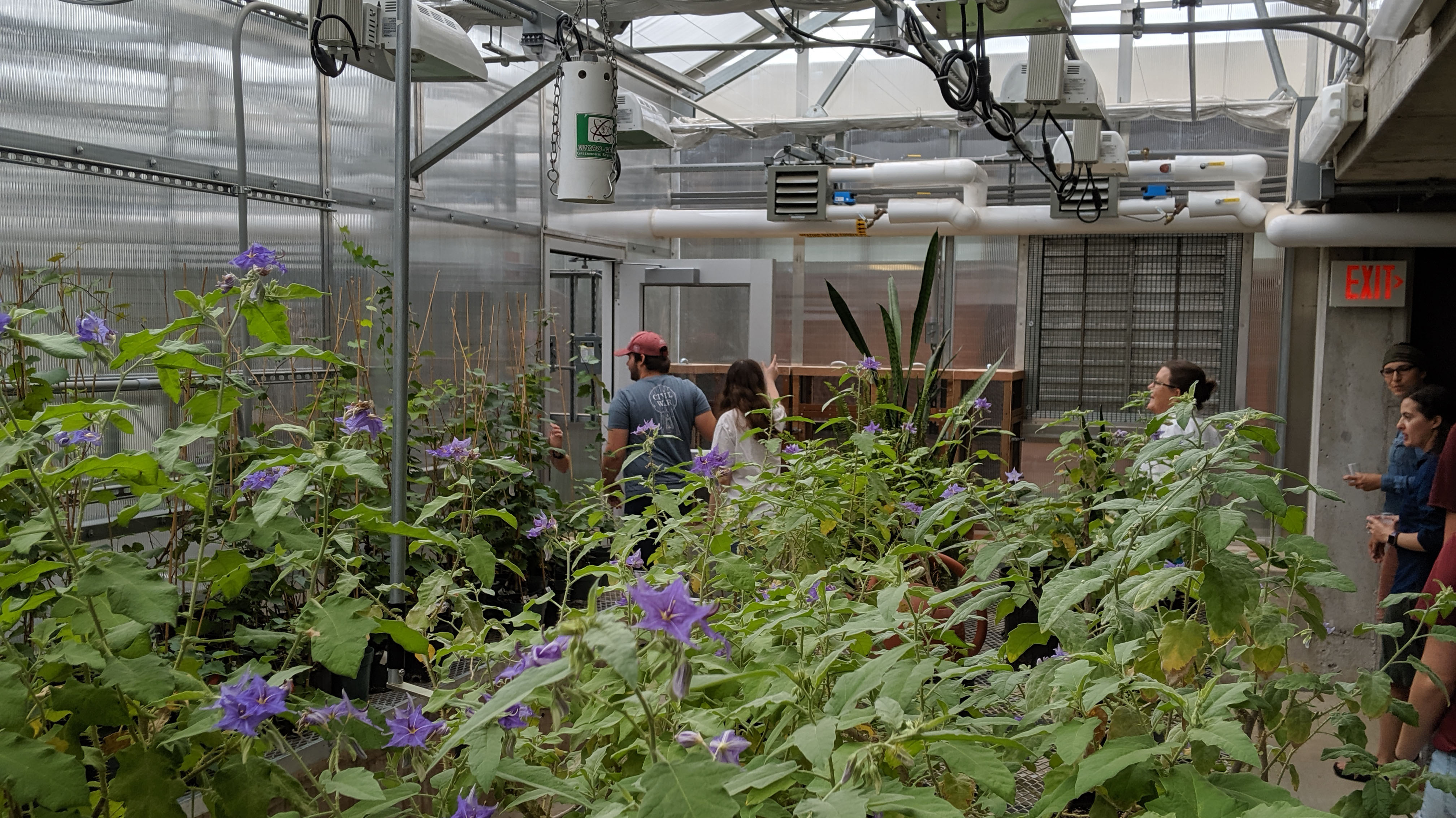 Students and plants in greenhouse