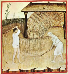 Two people harvesting a wheat field