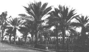 Ridvan garden in Baghdad