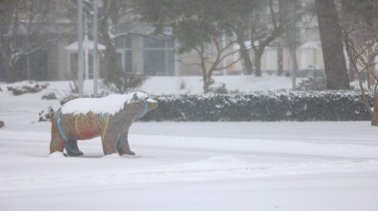 A Bear statue on a snowy day at Missouri State.