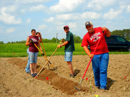 Sylvia Carter (left front), Breanne Smith (in back of Sylvia), Dr. Martin Kaps and Scott Mackey ridge up the strawberry rows.