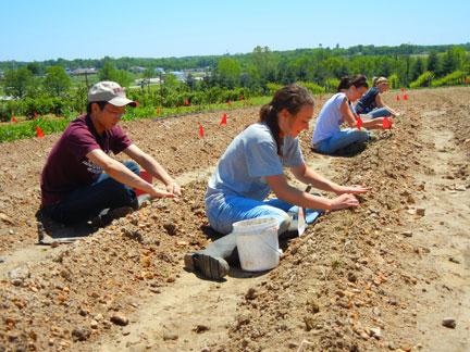 Strawberry planting crew