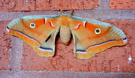 Moth on Faurot Hall