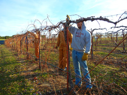 Pruning the West Catawbas