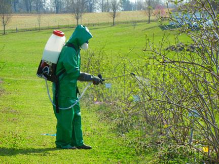 An unrecognizable Jeremy Emery sprays dormant oil on elderberries.