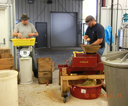 Josh (left) sorts out sound apples from unsound while Scott puts crushes apples before pressing.