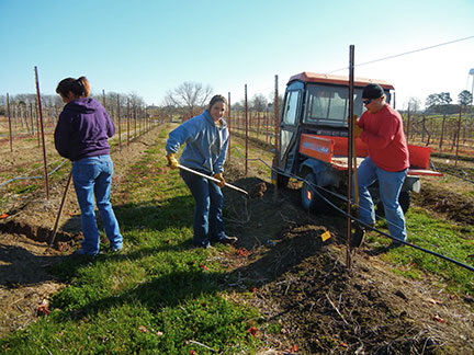 Constructing drainage-ways in a bermed vineyard