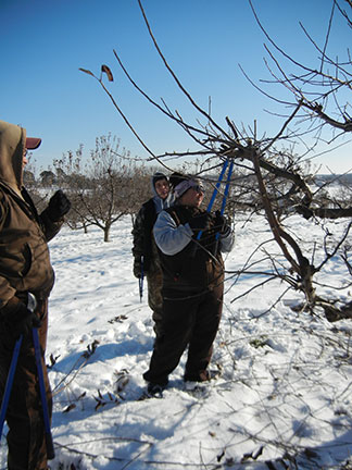 Randy Stout instructs the apple tree pruning crew.