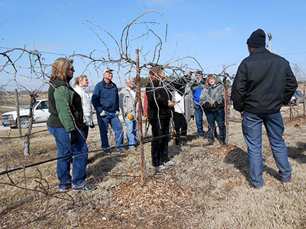 Susanne Howard demonstrates grape pruning.