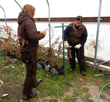 Taking dormant season data for raspberry project