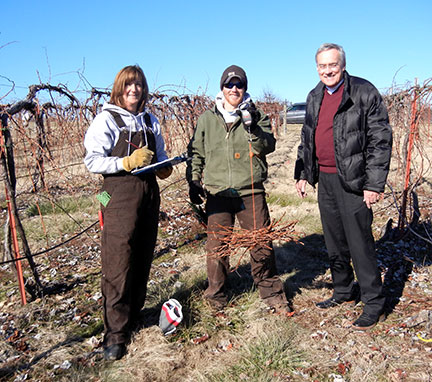 Shelia and Jeremy are taking the wood weights in the Catawba block. The wood weights help determine the number of buds to leave on the vines.