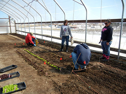 Plants were set 6 inches apart in the row and the rows were planted 18 inches apart.