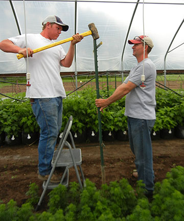 After the veggies were out of the way, the raspberry trellis posts were hammered in. Dean (left) and Tom are pictured here.