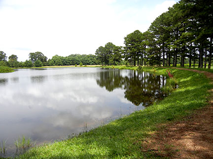 Here is the east side of Pine Pond.