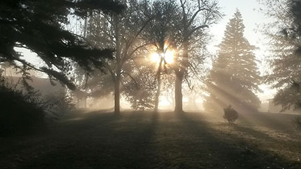 Morning mist and sunlight - photo by Susanne Howard
