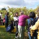 Susanne helps with instructions on how to harvest grapes
