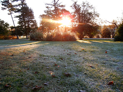 Here is a photo of the first fall frost at Mountain Grove taken in the Ozark Arboretum.