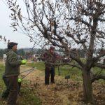 Pruning Away