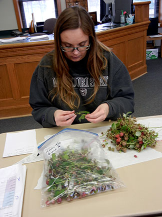 Jennifer Morganthaler is keeping track of everyone's berry count.