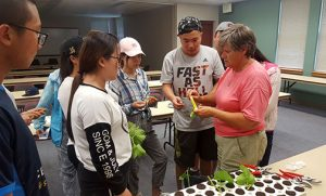 Susanne Howard shows the students how to collect and prepare softwood grape cuttings.
