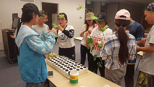 The students begin to make the cuttings.