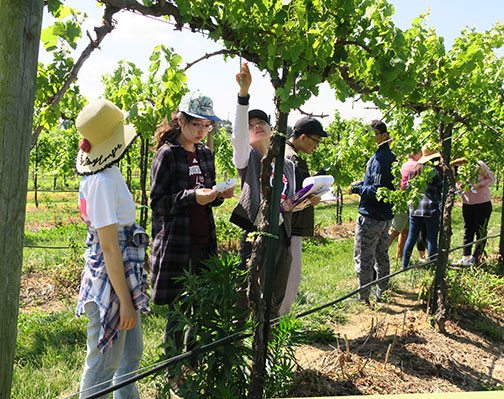 Ningxia grape and wine students work in the vineyards at Mountain Grove