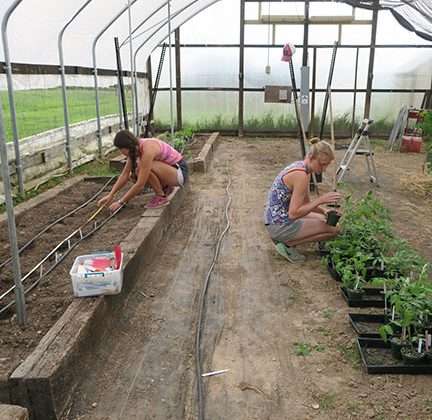 Indeterminate tomatoes planted in high tunnel today