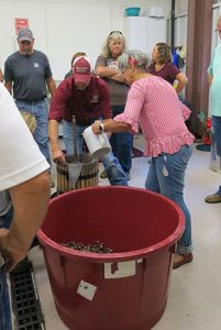The next step is transferring the crushed grapes to the press.