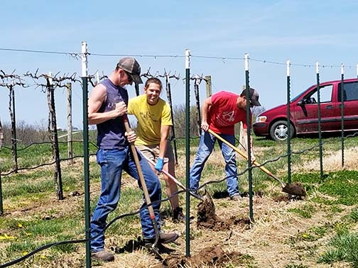 The digging crew works just ahead of the planting crew.