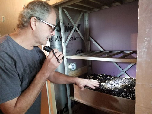 Bob looked at the cremini mushrooms and estimated the first harvest to be early next week.