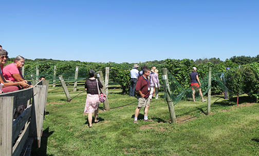 The grape breeders take a close-up look at the genomics vineyard