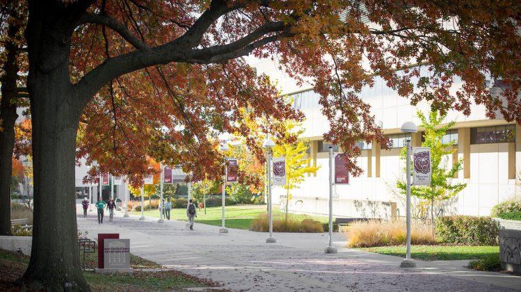 tree campus usa siu - 750×420
