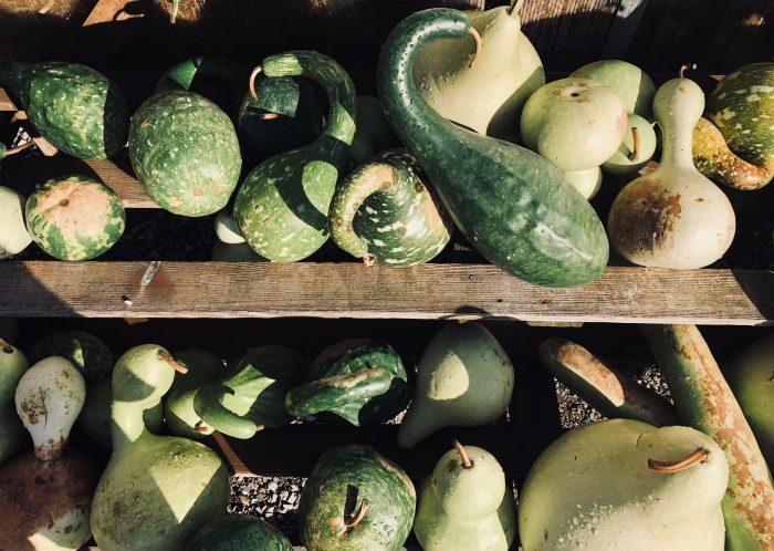 Gourds photographed by Sydney Zentz on Unsplash