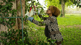 Woman pruning a tree