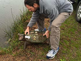 Dr. Ligon reintroducing a turtle to a habitat