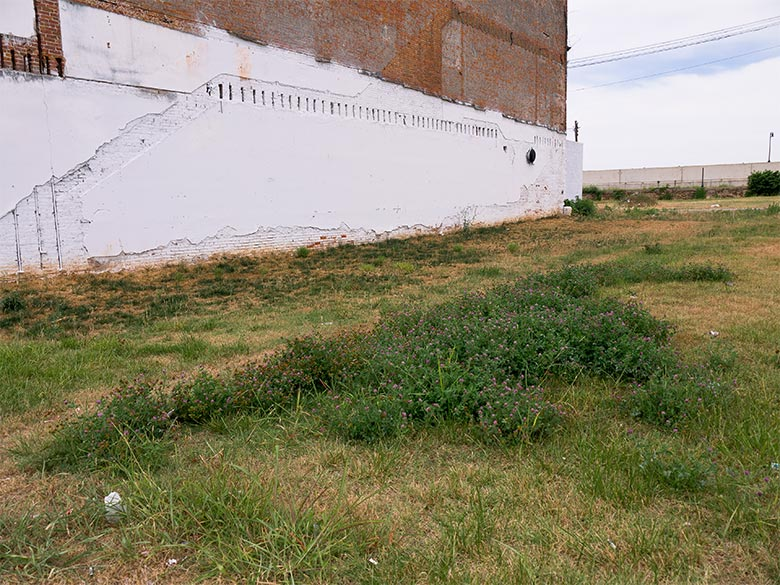 Brick building with white stucco next to a grassy lot