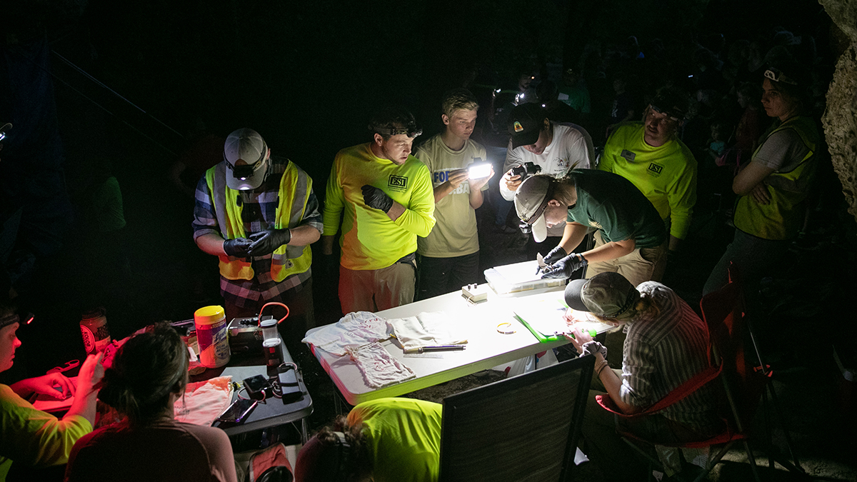 Group of volunteers inventory the bats inside a cave in Sequiota Park