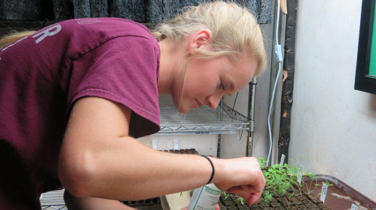 Rachel Veenstra works with plants