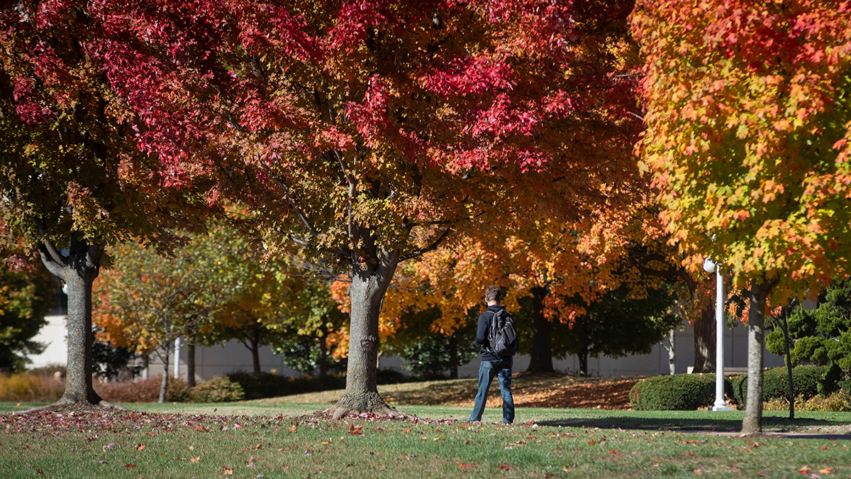 Vibrantly colored trees line campus walkway