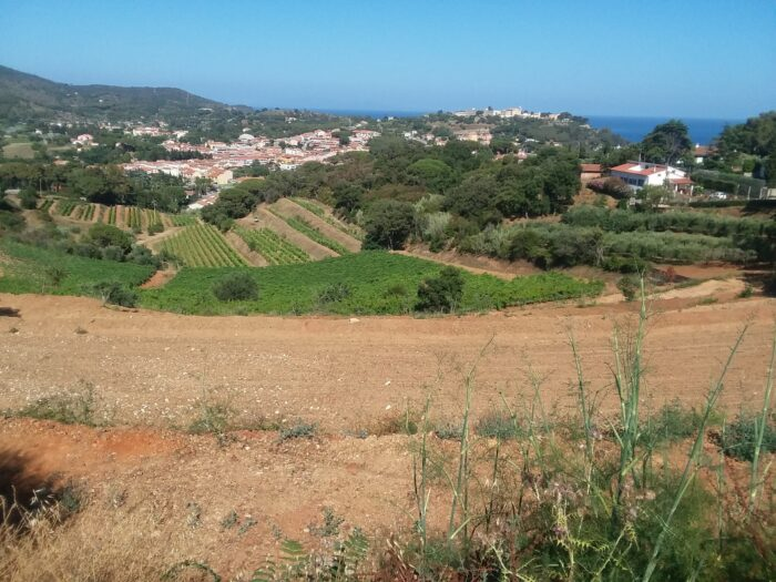 landscape photo of the Arrighi vineyards on the Isle of Elba