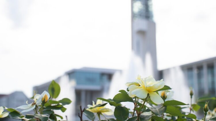 Flowers bloom in front of the majestic Hammons Fountain.